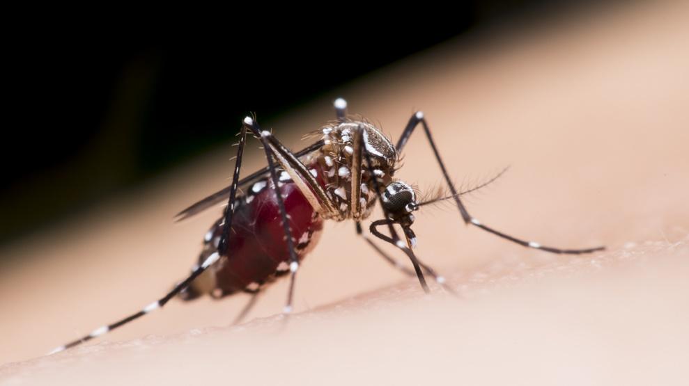 MosquitoMate